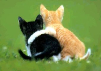 cat_bff[1]