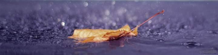 rain cover for twirter
