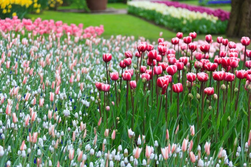 flower-fables